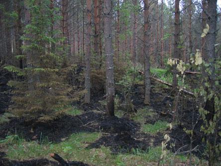 Färska spår av brand i terrängen. Bild: Katri Suhonen