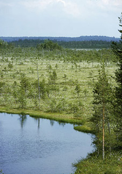 Haapasuo myr. Bild: Timo Nieminen