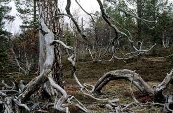 Tolosjoki området. Foto: Matti Mela