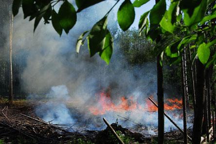 Ingen rök utan eld! Röken från svedjebränningen berättar om vårdbiotopens  skötsel. Bild  Pekka 93cdaa73ff