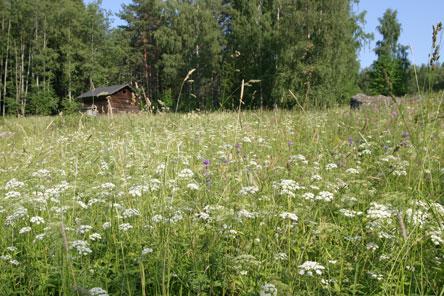 Äng vid torpet. Bild: Helinä Markkanen