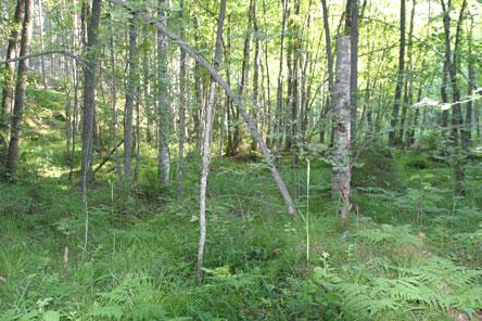 De frodiga lundarna är Linnansaaris rikedom. Bild: Helinä Markkanen