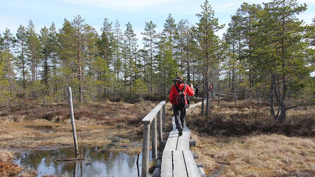 reputable site c3632 3b00e Kauhaneva-Pohjankangas. Bild  Sari Airas