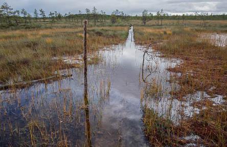 Pitkokset paikoin veden alla: Kuva: Tuija Warén.